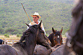 Tuscany, Italy Older Italian cowboy and horses in Tuscany