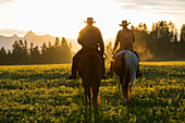 Cowboy riding across grassland with mountains behind, early morning, British Colombia, Canada. Model released.