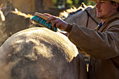 Cowboy grooming horse on ranch, British Colombia, Canada