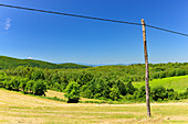 Lonely expanse with fields and forest and a telegraph pole near Perjasica, Croatia