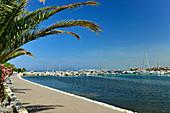 Marina with palm tree and promenade, Bibinje near Zadar, Croatia
