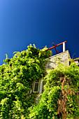 Completely overgrown house with roof terrace in Sibenik, Adriatic Sea, Dalmatia, Croatia