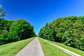 View of the lonely Danube cycle path Euro Velo 6 near Orth an der Donau, Donauauen, Austria