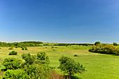 Weite Landschaft mit Feldern und Bäumen bei perfekt blauem Himmel, Bruck an der Leitha, Niederösterreich, Österreich