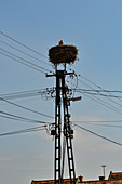 Mast with a nest, a stork and power cables at Fertorakos on Lake Neusiedl, Hungary