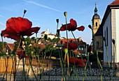 Blick auf Basilika und Burg, Gößweinstein, Mohnblumen Rot, Ansicht, von unten, Blumen, Fränkische Schweiz, Ober-Franken, Bayern, Deutschland
