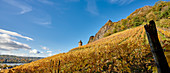 Autumn vineyard with Siegfriedsfelsen near Bad Honnef-Rhöndorf, Germany