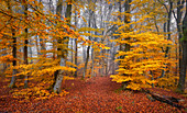 Outside; Outside; Outdoor shot; Outdoor shot; Trees; Baierbrunn; Trees; Bavaria; Book; Beech forest; Germany; Outside; Haze; Europe; Autumn; Autumnal; October; Orange; Yellow; Idyll; Idyllic; Landscape; Fairytale; Fairytale; Deserted; Morning Mood; Mystical; Nature; Fog; Nobody; Path; Travel; Quiet; Calm; Quiet scene; Sunlight; Quiet; Silence; Atmospheric forest; Forest path; Trail; Path; Magic forest