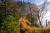 On the way to Sonnenspitz in autumn, Kochel am See, Upper Bavaria, Bavaria, Germany, Europe