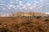Herbstmorgen im Moorgebiet am Staffelsee, Uffing, Blaues Land, Oberbayern, Bayern, Deutschland, Europa