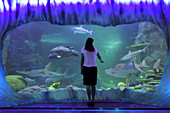 SYDNEY - FEB 21 2019:Woman looking at Sharks in Sea Life Aquarium in Sydney New South Wales Australia that displaying more than 700 species and 13,000 individual fish and other sea and water creatures.