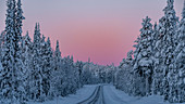 Frozen road and trees with Arctic light close to Luosto, Lapland, Finland