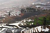 duoyishu rice terrace at sunrise, yuanyang rice terraces, Honghe Yunnan, Southern China, China