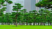 Park close to Tokyo Royal Palace, Tokyo, Japan