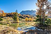 Alta Badia, Bolzano province, South Tyrol, Italy, Europe. Autumn on the Armentara meadows, above the mountains of the Zehner and Heiligkreuzkofel