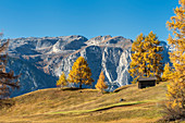 Alta Badia, Bolzano province, South Tyrol, Italy, Europe. Autumn on the Armentara meadows, above the moantains of the Puez