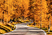 Autumn in Dolomites, a beautiful road into the Larches, Trentno alto Adige, Italy