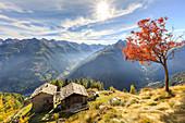 Sunburst on the autumnal landscape at Alpe Paglia, Tartano Valley, Sondrio province, Valtellina, Lombardy, Italy