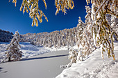Larches covered with snow after an autumnal snowfall at Lake Casera in the Orobie Alps, Valtellina, Lombardy Italy Europe