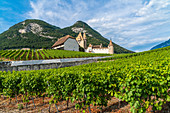 Aigle Castle surrounded by vineyards, canton of Vaud, Switzerland
