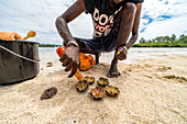 Man pouring water over sea urchins to clean it before eating, Indian Ocean, East Coast, Mauritius