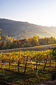 Levizzano Rangone scenery with vineyards, Levizzano Rangone, Castelvetro di Modena district, Modena province, Emilia Romagna, Italy.