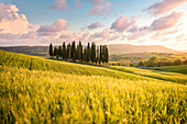 San Quirico d'Orcia cypresses during sunset. San Quirico d'Orcia, Orcia Valley, Tuscany, Italy