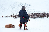 A nenets raindeer herder and his dog watching to the herd. Polar Urals, Yamalo-Nenets autonomous okrug, Siberia, Russia