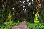 Woodstock Gardens and Arboretum, Inistioge, County Kilkenny, Ireland.