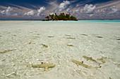 Sharks, Blue Lagoon, Rangiroa, Tuamotu Archipelago, French Polynesia. Digital enhanced.