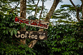 Bolaven, plateau, mountains, South, Southeast Asia, Laos, Asia, green, landscape, coffee, Mystic Mountain Coffee, Champasak