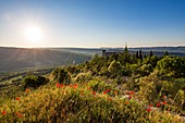 France, Vaucluse, regional natural reserve of Luberon, Viens, the village, the castle and the tower of Pousterle built in the XVIth century