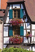 France, Haut Rhin, Route des Vins d'Alsace, Kaysersberg , half timbered houses