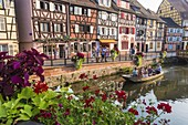 France, Haut Rhin, Alsace Wine Route, Colmar, Krutenau district in La Petite Venise district, quay of the Poissonerie, stroll in boat on Le Lauch