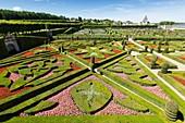 France, Indre et Loire, Loire Valley listed as World Heritage by UNESCO, Villandry, Chateau de Villandry gardens, property of Henri and Angelique Carvallo