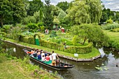 France, Somme, Amiens, the Hortillonnages are old marshes filled to create a mosaic of floating gardens surrounded by canals, tour by boat