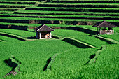Rice cultivation and irrigation system of Jatiluwih, Bali, Indonesia, Southeast Asia, Asia