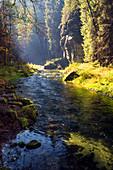 Kamnitz, Fluss, Herbst, Laubfärbung, Nationalpark, Böhmische Schweiz, Tschechien, Europa\n