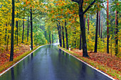 Road, rain, curve, autumn, Bielatal, National Park, Saxon Switzerland, Germany, Europe