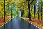 Straße, Regen, Kurve, Herbst, Bielatal, Nationalpark, Sächsische Schweiz, Deutschland, Europa\n