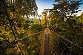 France, French Guiana, Kourou, Camp Canopee, Discovery of the canopy, 36 m from the ground, passing from tree to tree thanks to suspended bridges, at sunset