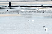 France, Finistere, Locquirec, fishing on foot at low tide in the bay of Locquirec