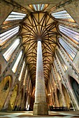 France, Haute Garonne, Toulouse, Jacobin convent, church, the ceiling of the nave, church 's palm-tree vault