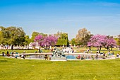 France, Paris, area listed as World Heritage by UNESCO, the Tuileries Garden in spring