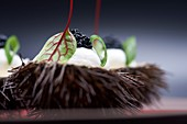 France, Pyrenees Orientales, Banyuls sur Mer, Pascal Borrell, star chef, restaurant le Fanal, sea urchins with herbs and thai vegetables by Pascal Borrell