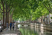France, Gard, Nimes, Quay of the Fountain, Canal in the shade of plane trees, group of friends walking on a path