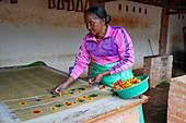 Antemoro paper atelier, making flower-embedded paper, Ambalavao, Fianarantsoa province, Ihorombe Region, Southern Madagascar, Africa