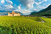 Castle of Aigle set in rolling hills of vineyards, canton of Vaud, Switzerland, Europe