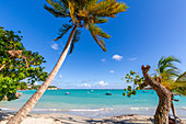 La Datcha Beach, Pointe-a-Pitre, Guadeloupe, French Antilles, West Indies, Caribbean, Central America