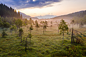 Lone trees in the misty landscape of Pian di Gembro Nature Reserve, aerial view, Aprica, Sondrio, Valtellina, Lombardy, Italy, Europe